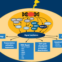 DNA Repair Defects Emerge as a New Category for Anticancer Therapies